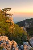 De pijnboom van de berg bij de zonsondergang stock foto