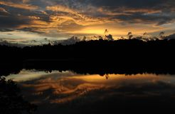 De Pijnboom van de zonsondergang Royalty-vrije Stock Afbeelding