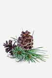 De pijnboom van Kerstmis Stock Afbeeldingen