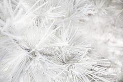 De pijnboom vertakt zich behandelde ijzige rijp Royalty-vrije Stock Fotografie