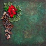 De pijnboom vertakt zich de rode wijnoogst van de Kerstmisvakantie van bloemenpoinsettia Stock Afbeelding