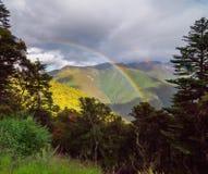 De pijnboombomen van het berglandschap dichtbij vallei en kleurrijk bos op helling Royalty-vrije Stock Foto