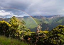 De pijnboombomen van het berglandschap dichtbij vallei en kleurrijk bos op helling Stock Fotografie