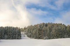 De pijnboombos van alpen Royalty-vrije Stock Foto's