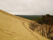 De pilat dunaire images stock