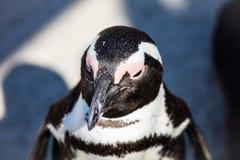 De pinguïn Royalty-vrije Stock Afbeelding