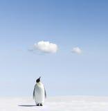 De pinguïn van de keizer op snowfield