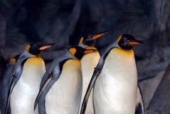 De Pinguïnen van de koning Stock Afbeeldingen