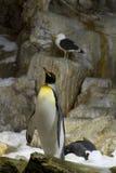 De pinguïnen van de koning in de sneeuw Stock Fotografie