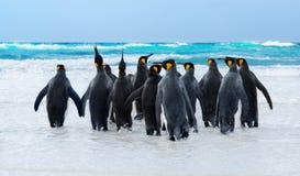 De Pinguïnen van de koning Royalty-vrije Stock Afbeeldingen