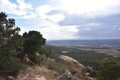 De Pinonpijnbomen bevinden zich schildwacht op Zwarte Mesa, Arizona die de Kolenmijn` s Infrastructuur overzien van Peabody stock afbeelding