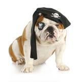 De piraat van de hond Stock Foto's