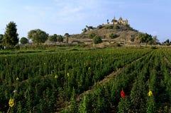 De piramide van Cholula Stock Fotografie