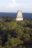 De piramide van Tikal stock afbeeldingen
