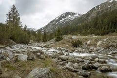 In de Pirin-berg, Bulgarije Stock Foto's