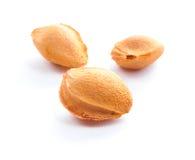 De pitten van de abrikoos. stock fotografie