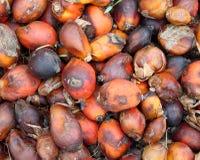 De pitten van de palm royalty-vrije stock afbeelding