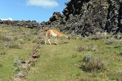De plaats door oude Indische stammen in het nationale Park Pali Aike wordt gewoond in die royalty-vrije stock fotografie
