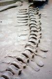 De plaats van de dinosaurusexploratie Stock Foto's
