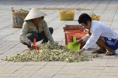 De plaatselijke bewoners die van Vietnam kruiden op de straat drogen Stock Foto's