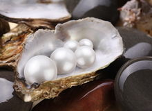 De placerparels van het beeld in shell stock foto