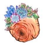 De plakken van de waterverfboom met succulente installaties royalty-vrije illustratie