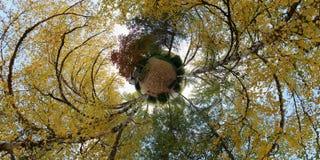 De planeet van oktober met boom doorbladert Royalty-vrije Stock Foto