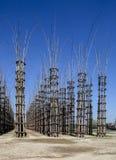 De Plantaardige Kathedraal in Lodi, Italië, omhoog tot gemaakt 108 houten kolommen waaronder een eiken boom is geplant Stock Foto