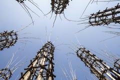 De Plantaardige Kathedraal in Lodi, Italië, omhoog tot gemaakt 108 houten kolommen waaronder een eiken boom is geplant Stock Afbeelding
