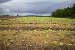 De plantaardige landbouw. stock afbeelding
