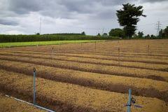 De plantaardige landbouw. royalty-vrije stock foto's