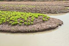 De plantaardige landbouw met waterirrigatie Royalty-vrije Stock Foto's