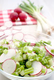 De plantaardige salade van de lente Stock Fotografie
