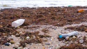De plastic flessen, stierven krabben en ander puin onder de algen op de zandige kust stock video