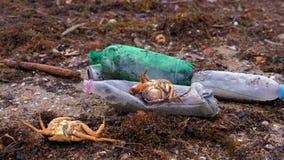 De plastic flessen, stierven krabben en ander puin onder het zeewier op de zandige kust stock videobeelden
