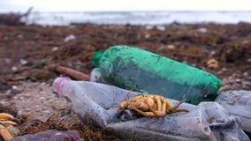 De plastic flessen, stierven krabben en ander puin onder het zeewier op de zandige kust stock video