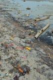 De Plastic flessen van de strandverontreiniging en ander afval op overzees strand Stock Afbeeldingen