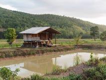De plattelandshuisjes worden gevestigd in het midden van de padievelden Stock Foto's