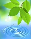 De plons en de bladeren van het water Stock Afbeeldingen