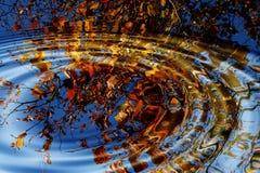 De plons van de herfst. Royalty-vrije Stock Afbeeldingen