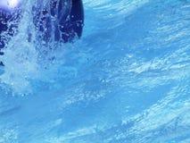 De plons van de pool Stock Foto