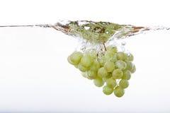 De Plons van druiven royalty-vrije stock fotografie