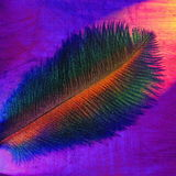 De pluim van de kleur Stock Foto's