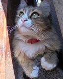 De pluizige gestreepte kat met een witte borst zit in de schaduw onder de raad die omhoog kijken royalty-vrije stock foto's