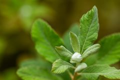 de pluizige groene nieuwe groei van bladeren op struik in de zomer royalty-vrije stock afbeelding