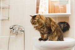 De pluizige kat bevindt zich op een witte wasbak in de badkamers en ziet neer eruit royalty-vrije stock afbeeldingen