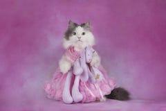 De pluizige kat in een roze kleding houdt een favoriet stuk speelgoed royalty-vrije stock fotografie