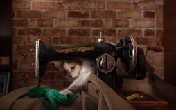 De pluizige kat speelt en steelt groene metende band Oude naaimachine stock foto's