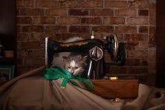 De pluizige kat speelt en steelt groene metende band Oude naaimachine royalty-vrije stock fotografie