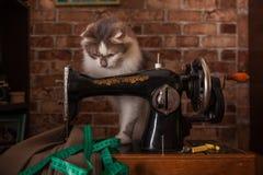 De pluizige kat speelt en steelt groene metende band Oude naaimachine royalty-vrije stock foto's